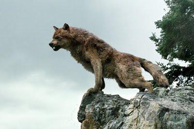 jacob+black+lobo