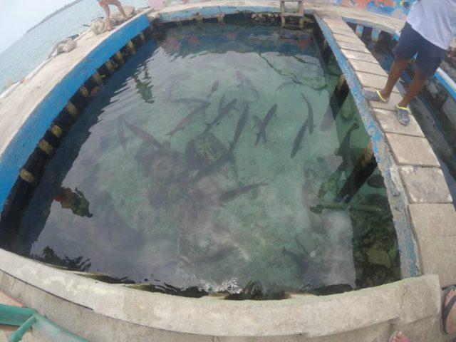acuario-santa-cruz-del-islote-1024x768
